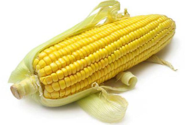 Производство стандартизированного кормового продукта на основе депозитов биотопливных культур как перспективная биотехнология