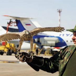 РУССКОЕ НЕБО ДЛЯ РУССКИХ САМОЛЕТОВ: Слияние авиакомпаний даст шанс авиапрому РФ