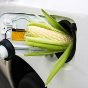 Если биотопливо гнать в каждом дворе?