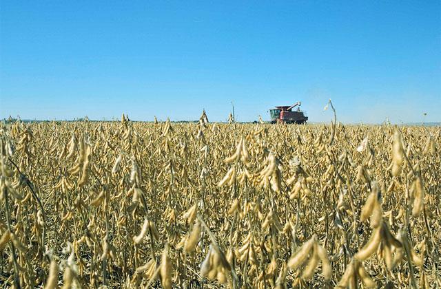 Предложена программа новой индустриализации России: биоуглеводороды, самозанятость и энергонезависимость на столетия вперёд