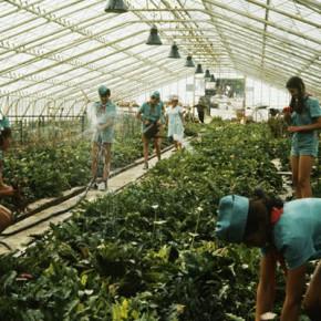 РАДИО «Спутник». Запретом на цветы из Голландии РФ защит своих производителей